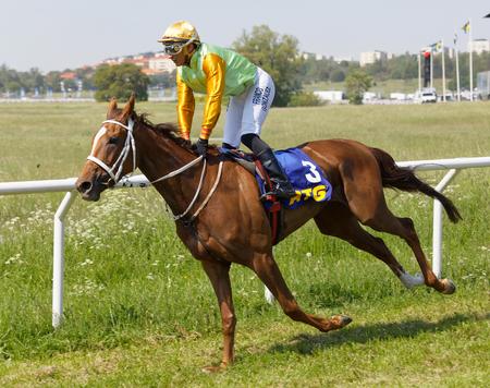 STOCKHOLM, SWEDEN - JUNE 06, 2019: Side view of jockey Franco Gonzales riding an arabian gallop race horse at ATG Nationaldags Galoppen at Gardet. June 6, 2019 in Stockholm, Sweden