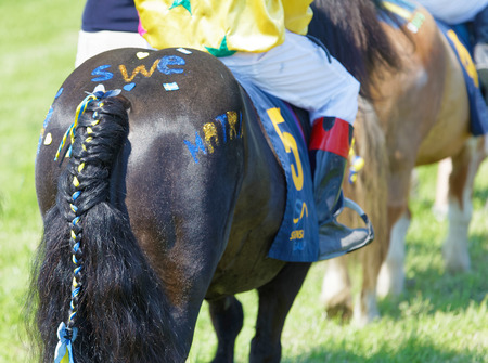 STOCKHOLM, SWEDEN - JUNE 06, 2019: Closeup of a ponys back painted in blue and yellow at ATG Nationaldags Galoppen at Gardet. June 6, 2019 in Stockholm, Sweden 報道画像