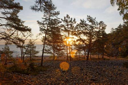 Beautiful evening light at the sea, the sunlight filter through pine trees.