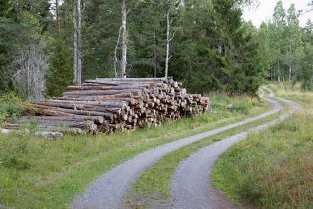 Rural country road in the forest and a pile of tree trunk