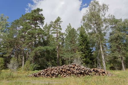 Pile of tree trunk in the forest at the country road