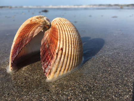 Close up view of a shell on the beach