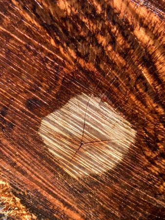 Close up view of a tree trunk texture 写真素材