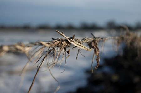 rotten: barbwire rotten Stock Photo