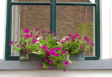 outside the box: flower box hanging outside the window  Stock Photo