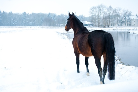 horse standing in a winter white landscape along a river photo