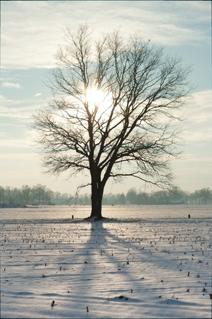 snowlandscape: silhouet of single tree in snow landscape