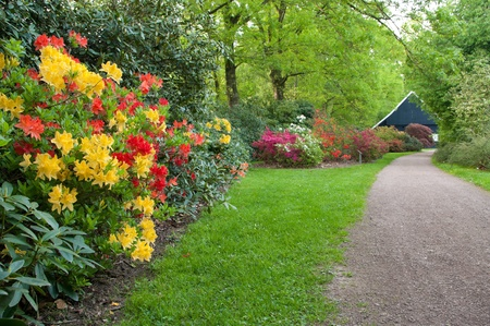 red and yellow rhododendrons in a tree park Stock Photo
