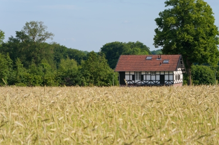 wheat field with a typical house in the background Stock Photo - 14722141