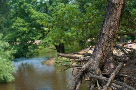 roots of a tree exposed due to erosion of a small river Stock Photo - 16909037