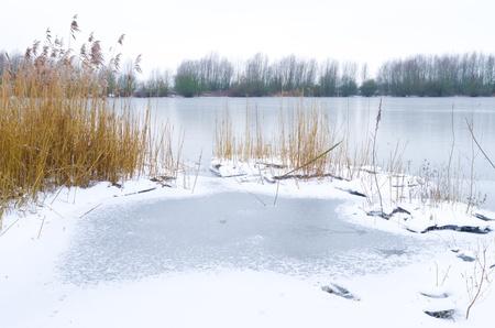frozen lake: bevroren meer met riet op de voorgrond