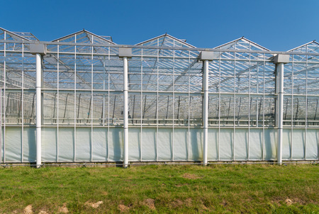 wintering: exterior of a commercial greenhouse against a blue sky Stock Photo