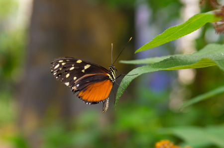 plante tropicale: beautiful butterfly on a tropical plant