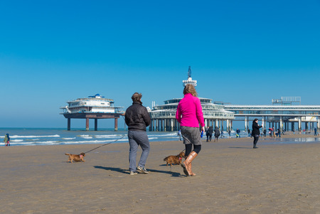 scheveningen: SCHEVENINGEN, NETHERLANDS - MARCH 8, 2015: Unknown people letting their dogs out a sunny spring day on the North Sea beach. In the background the Scheveningen Pier.