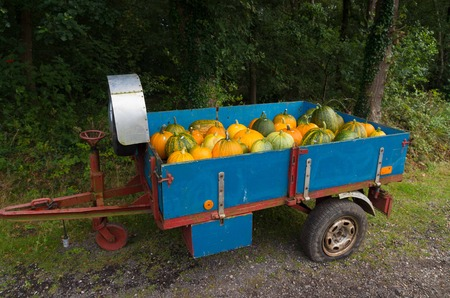 gourds: gourds for sale in a small trailer