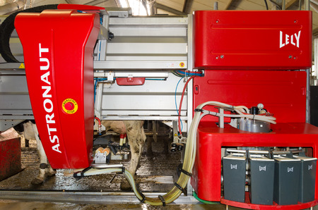 cattle wire wires: DINKELLAND, NETHERLANDS - OCTOBER 10, 2015: Cows being milked by a fully automated milking robot