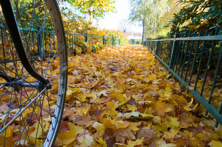 country roads: low angle view of a bicycle wheel on a bed of fallen autumn leaves Stock Photo