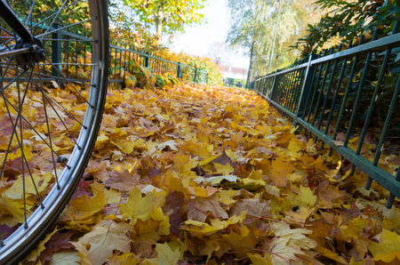 extreme angle: low angle view of a bicycle wheel on a bed of fallen autumn leaves Stock Photo
