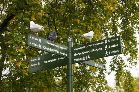 directional: directional street sign in St James Park in London