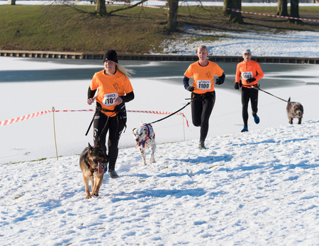 OLDENZAAL, NETHERLANDS - JANUARY 22, 2017: Group of unknown joggers canicross running in a snow white landscape