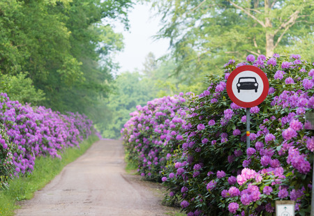 beautiful rhodedendron lane with forbidden for cars shield