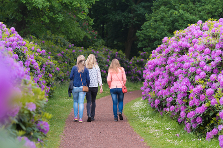invitando: OLDENZAAL, NETHERLANDS - MAY 27, 2016: Three unknown girls seen from behind in a lane with blooming pink rhododendron flowers Editorial