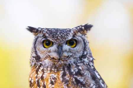 owl in an animal park in germany