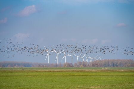 row of wind turbines with a flock of birds passing by