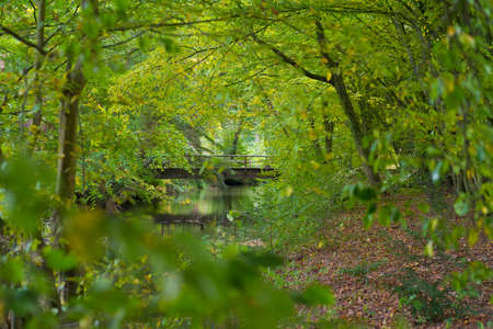 small wooden footbridge over a stream in a forest