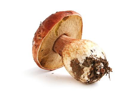 cep: Cep mushroom