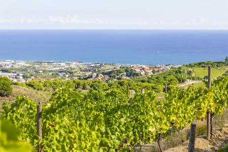 Vineyards of the Alella wine region near the Mediterranean Sea in Catalonia, Spain