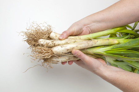 Calcots, typical vegetable from Catalonia, Spain.