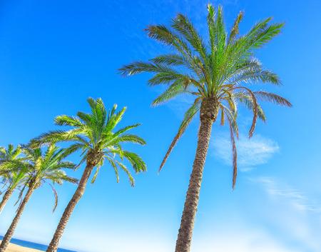 Palm trees against a blue sky, beach and sea.