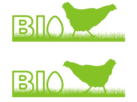 chicken egg: biological chicken egg