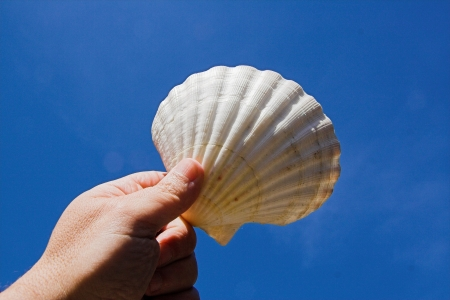 scallop in front of a blue sky