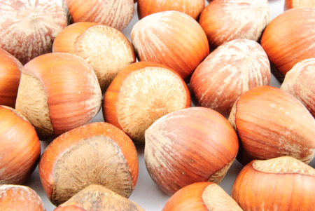 corylus: Closeup view of hazelnuts (Corylus avellana) on white background
