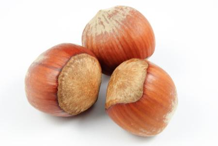 corylus: three hazelnuts (Corylus avellana) on white background