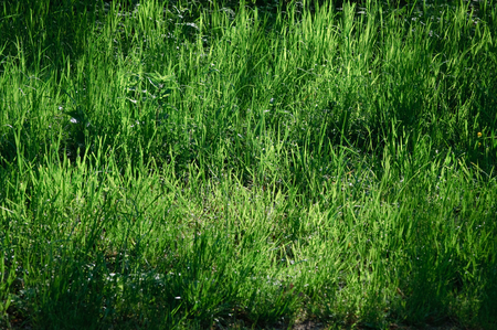 feral: feral spring meadow with very long blades of grass