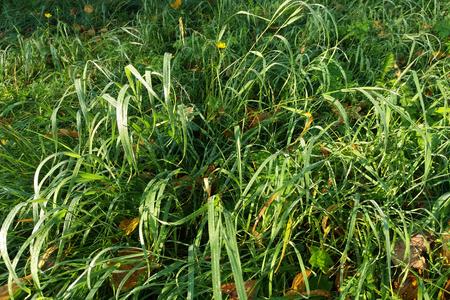 herfstgrassen en bladeren in de vroege ochtend