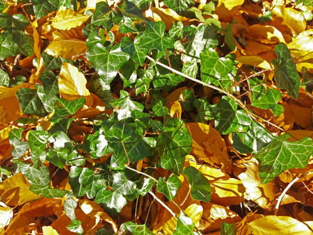 wilted foliage on a meadow in autumn Stock Photo