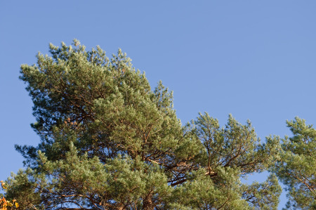 trees with green and brown leaves and a clear blue sky