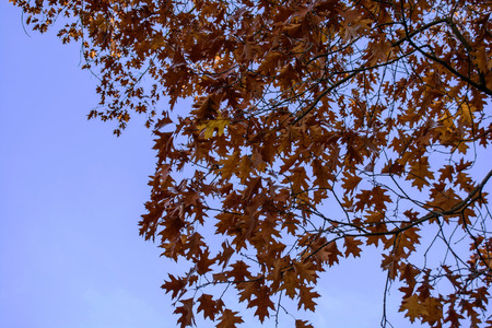 Autumnal trees on a sunny autumn day with blue sky Foto de archivo