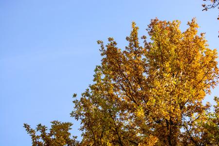 Autumnal trees on a sunny autumn day with blue sky Stok Fotoğraf