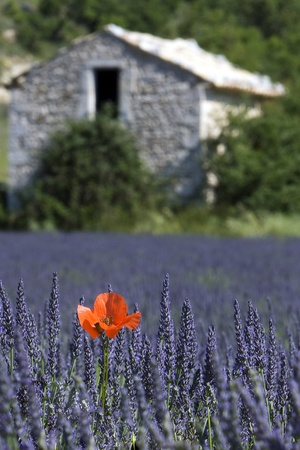 blte: in der Provence Stock Photo