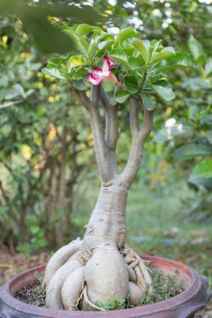 azalea: azalea flowers