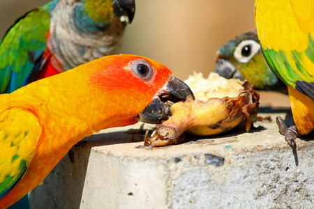 Many colorful parrot enjoy eating food with friend