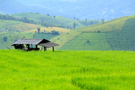 Farmer hut staying on green paddy field with colorful of high mountain background. Nature landscape at Ban Pa Pong Pieng, Chiang Mai, Thailand