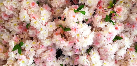 Beautiful pink flower or sakura spring wild blooming for background - Beauty of Nature, Wallpaper and Plant concept