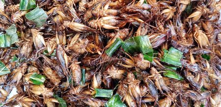 Many fried insect or cricket with sliced of banana leaves for sale at street food market - Asian food, Animal, Special menu and Pattern background