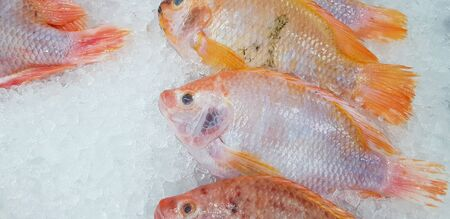 Many fresh tilapia farm fish putting and freeze on ice for sale at fish market or supermarket - Animal for food, Ingredient and Cooking concept